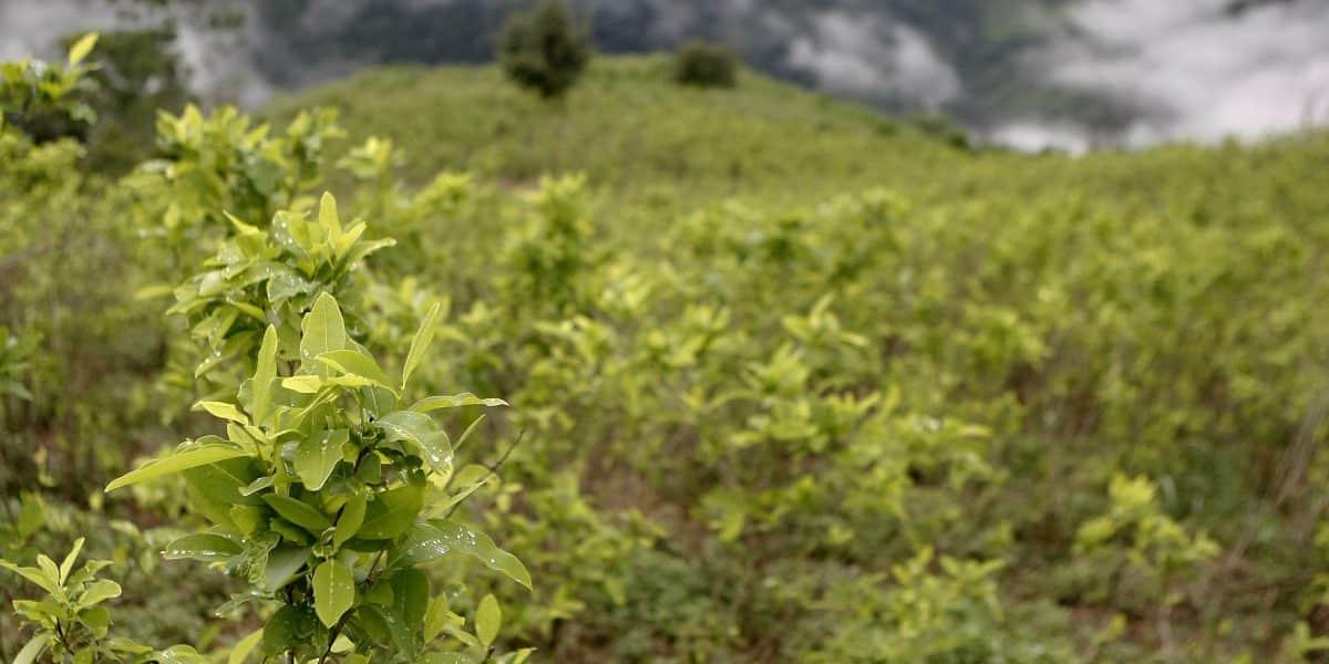 Fiscalía recuperó tierras en poder de FARC que serían más grandes que Bogotá