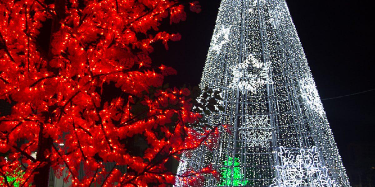 En fotos: fauna y flora los motivos del alumbrado navideño en Barranquilla
