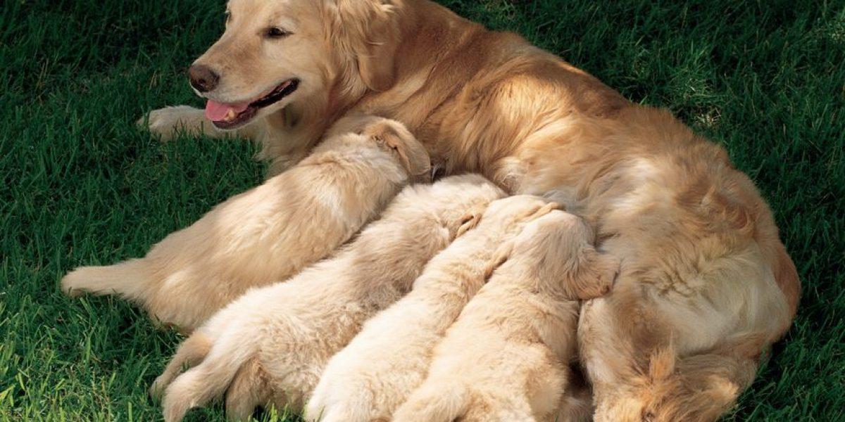 Lo que usted debe saber sobre el destete de las mascotas