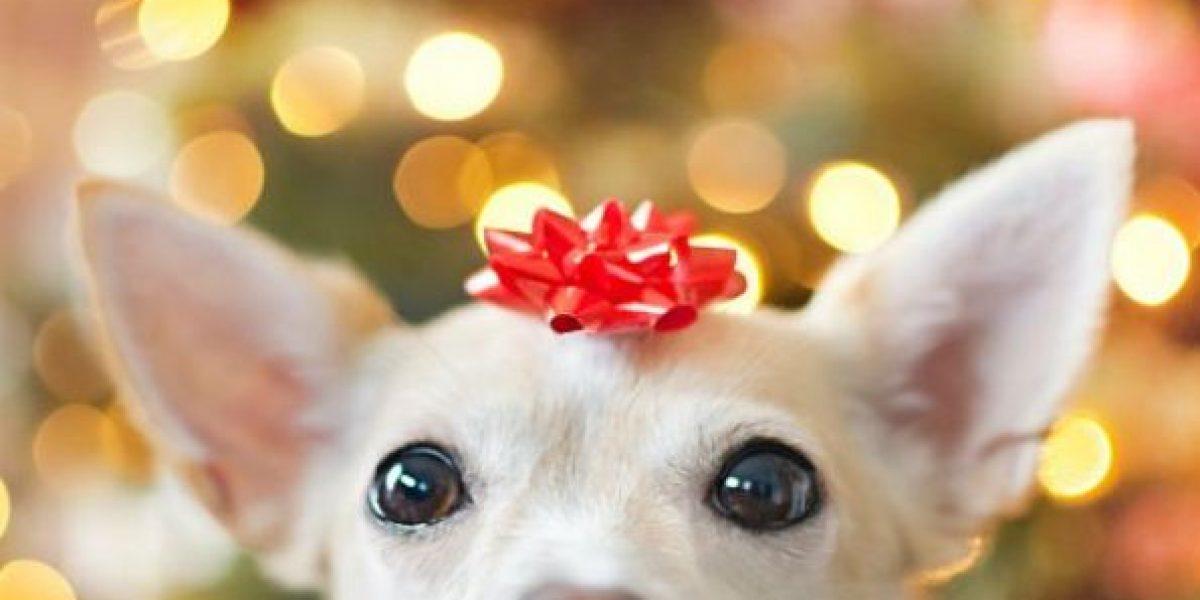 Top: Regalos que un amo debería darle a su mascota en Navidad