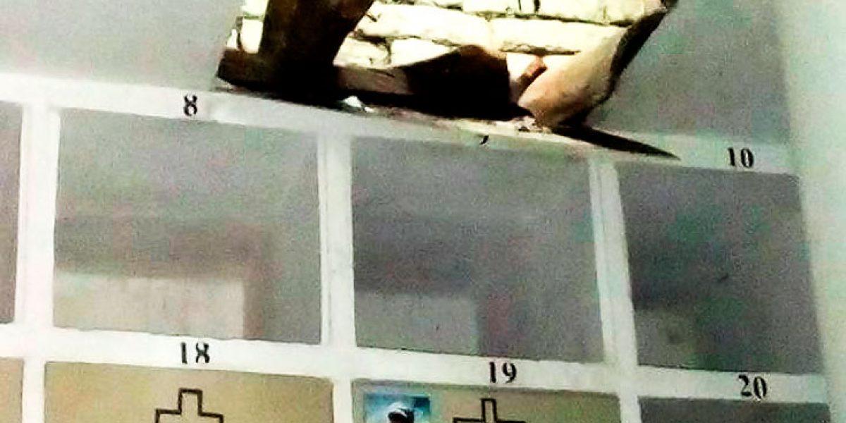 Frustran cinematográfico intento de robo a banco en Ginebra, Valle