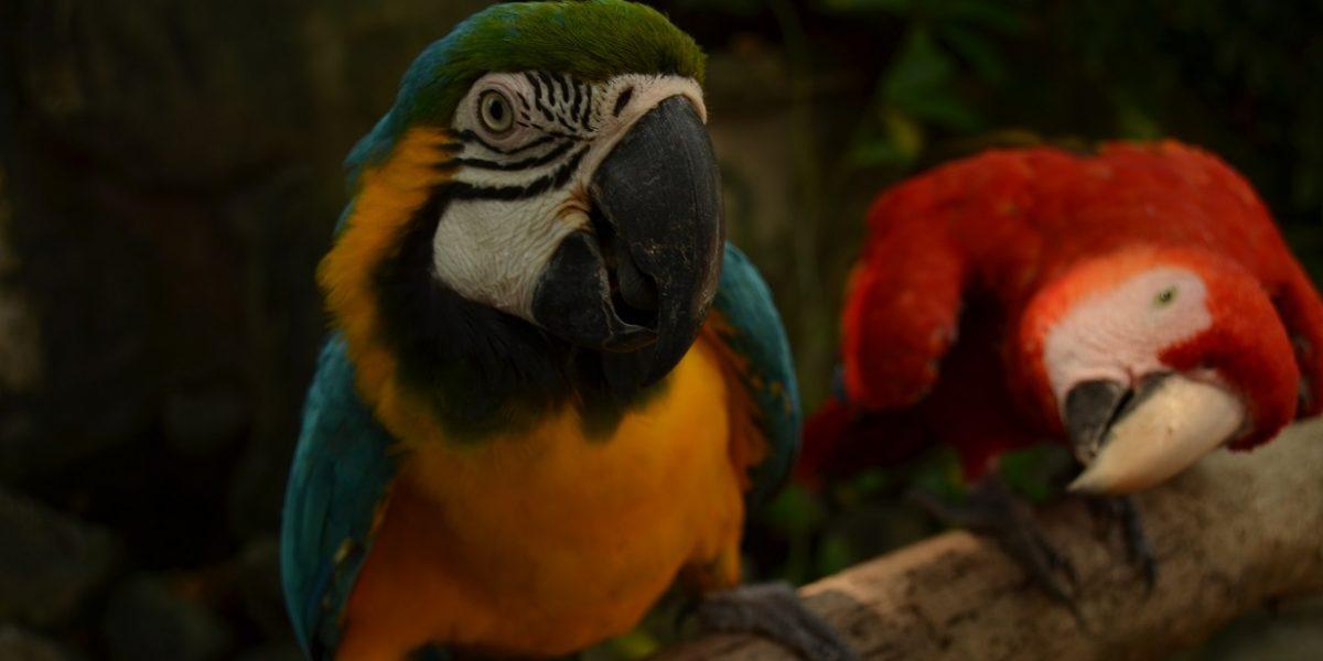 Vacaciones en el Zoológico en la Agenda de Barranquilla