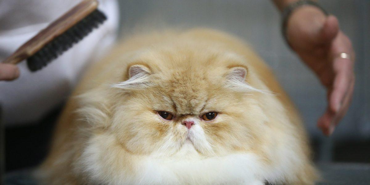 La televisión celebra el Día Mundial del Gato