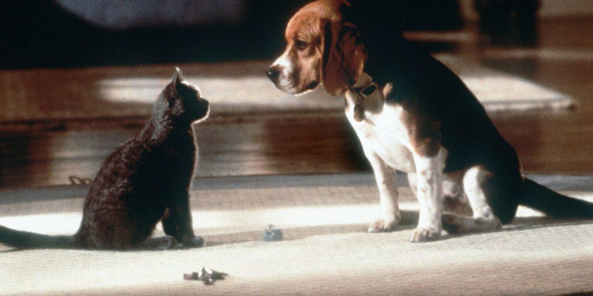 Los perros y gatos tendrán su propia