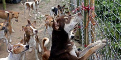 Desalojo de fundaciones de animales enfrenta a los habitantes de Tabio