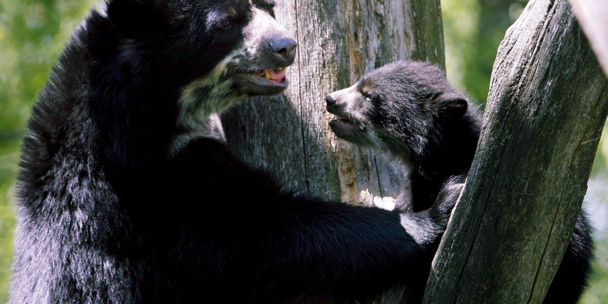 Ofrecen hasta 15 millones de pesos de recompensa para dar con asesinos del oso andino