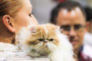 El Festival de los Animales llega a la UVA Ilusión Verde de El Poblado