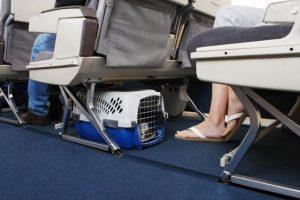 Consejos útiles para que usted ni su mascota sufran en un viaje por cielo o tierra
