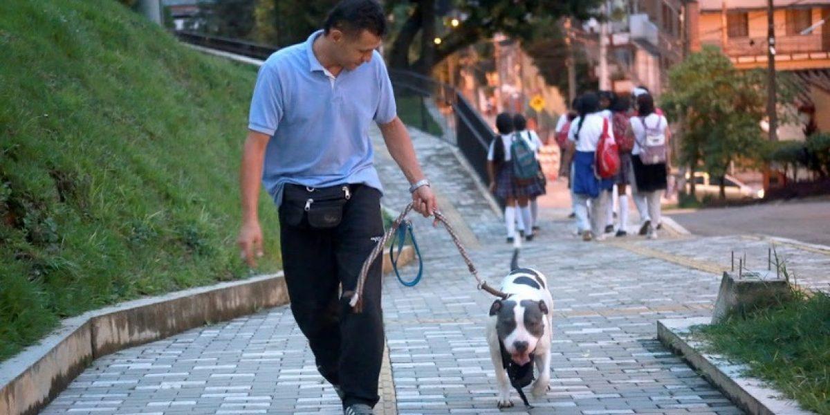 ¿Qué pasa con los derechos de los animales en Medellín?