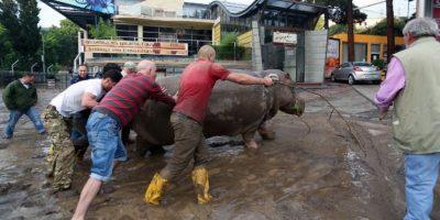 Lluvia provoca estampida en zoológico y al menos 12 muertos