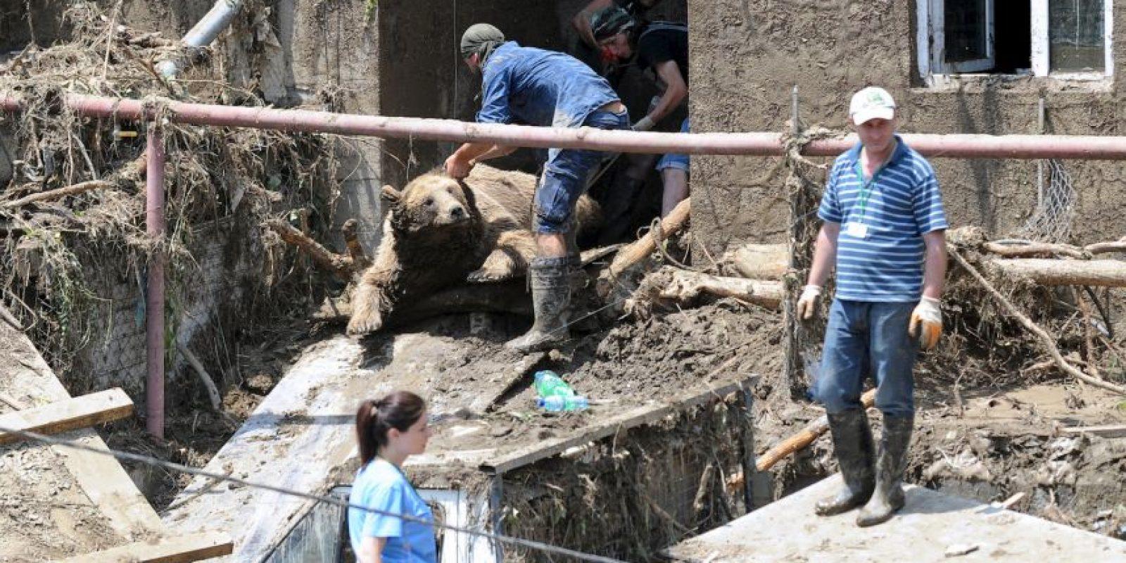 Policías especiales de Georgia han sido acusados de reaccionar agresivamente ante la capturar de los animales que se escaparon del zoológico. Foto:AFP
