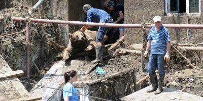 Acusan a la policía de Georgia de atentar contra los animales