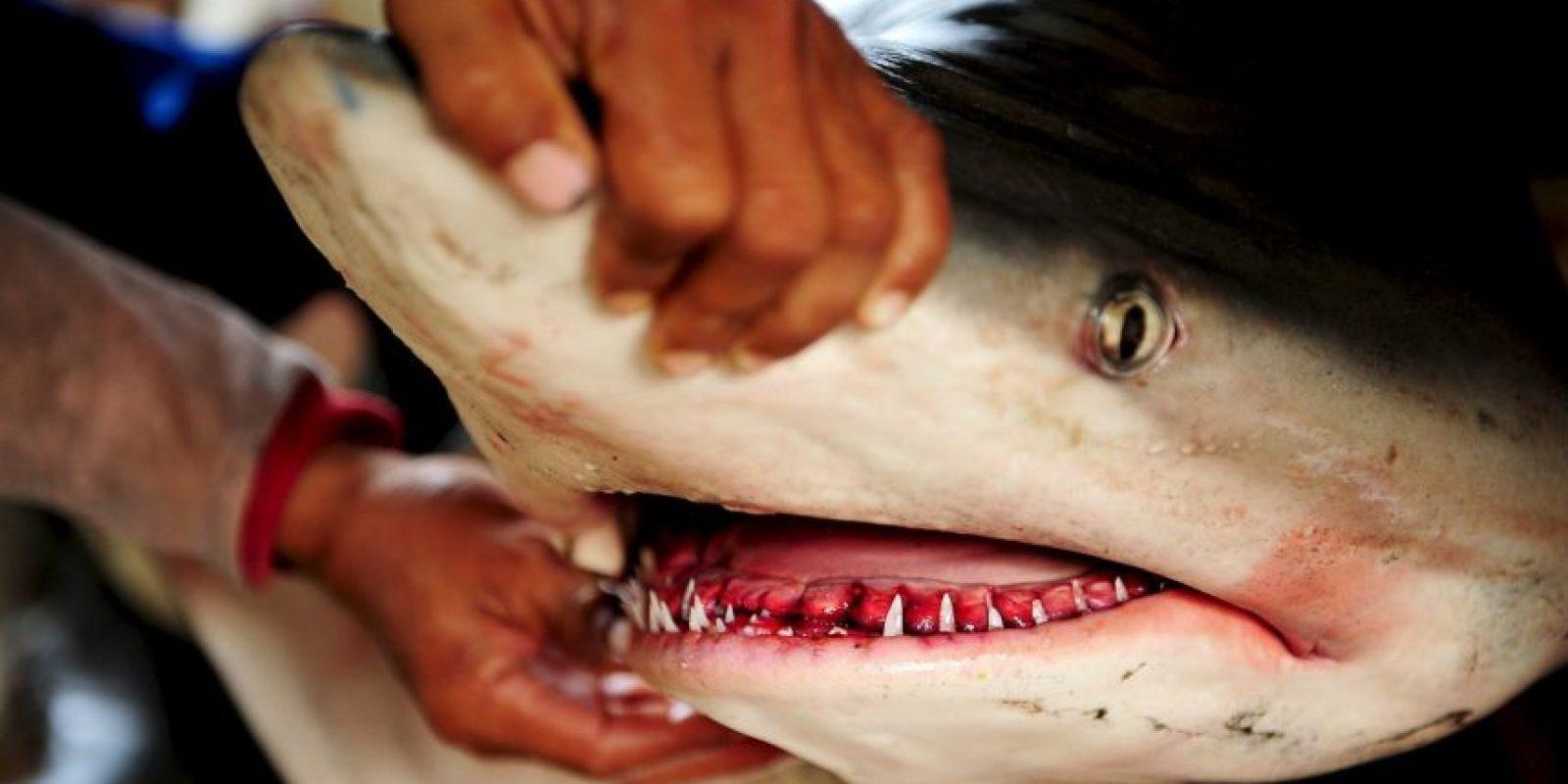 Un hombre agredió a un tiburón con su machete. Foto:Getty Images