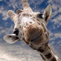 ¡Hola! Foto:Coca-cola/Getty