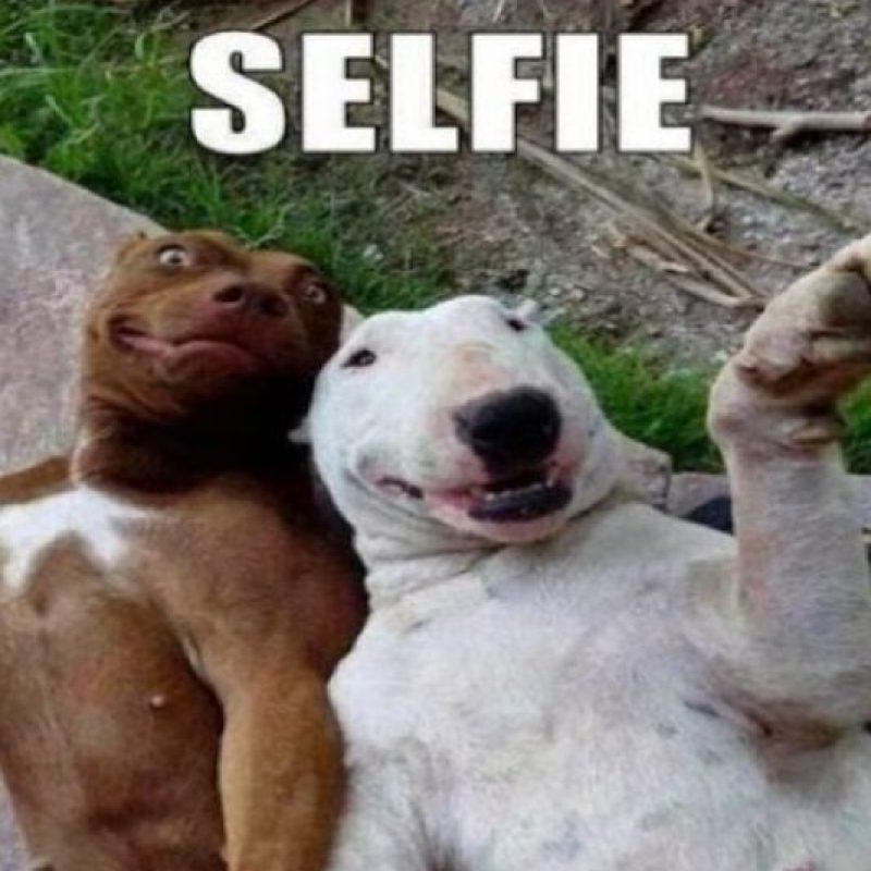 Selfie de perros Foto:Pinterest