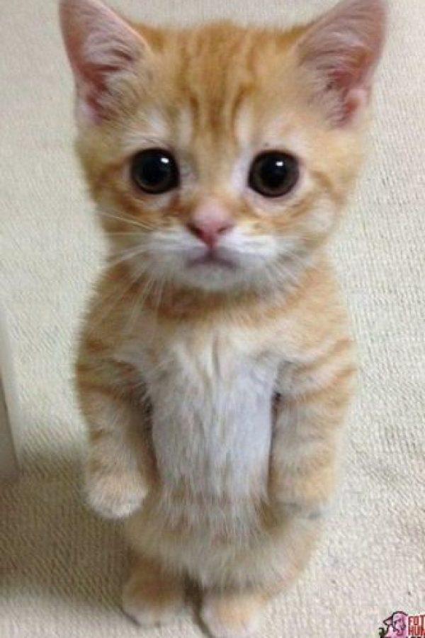 Aww… ¡Sumamente tierno! Foto:Tumblr