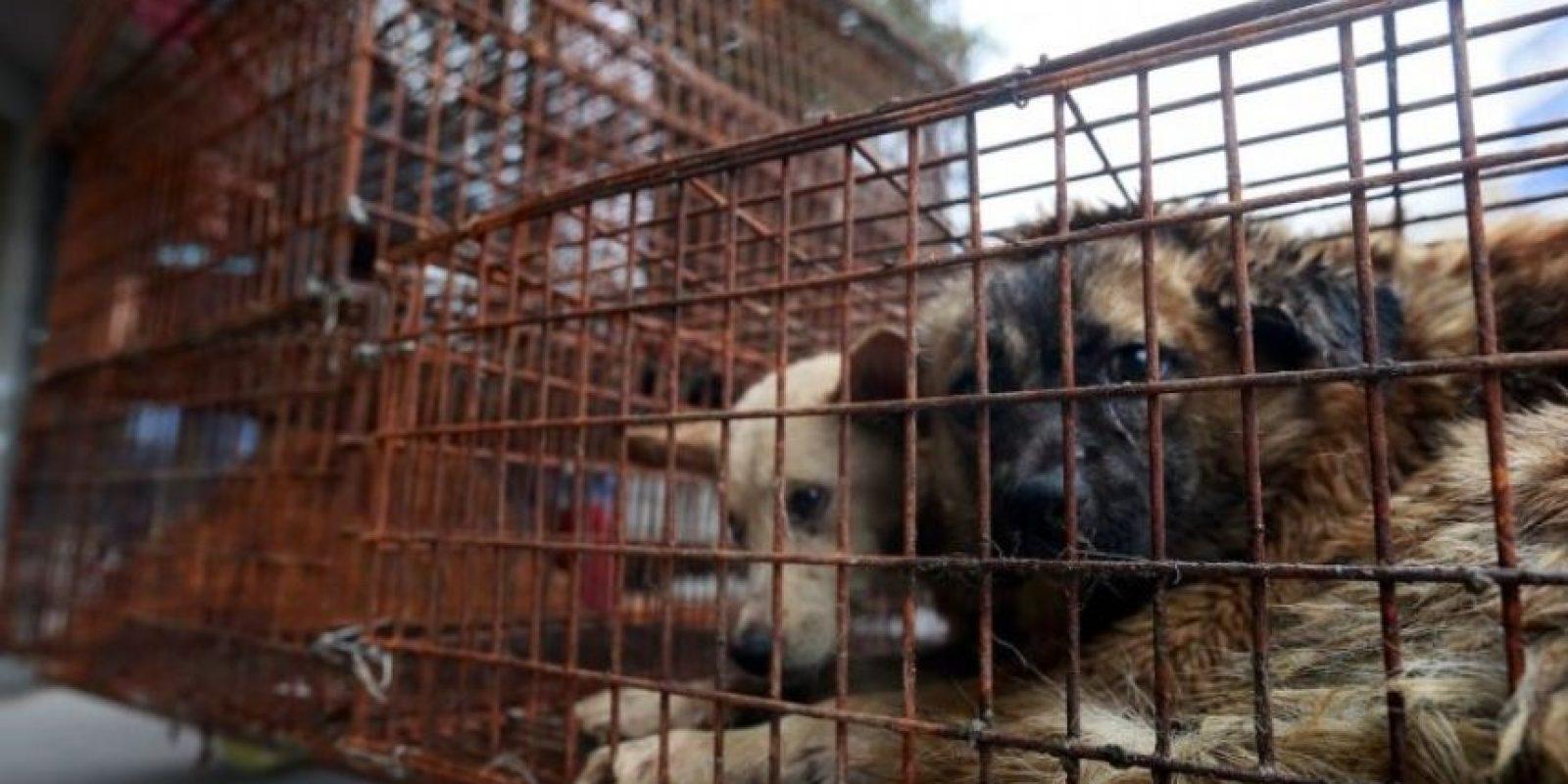 1. Festival de carne de perro Foto:Vía AFP