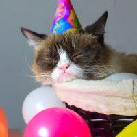 Cerca de dos millones de vídeos sobre gatos traviesos fueron subidos a YouTube sólo en 2014, recibiendo unos 26 billones de visualizaciones. Lo que significa que recibieron más visitas que cualquier otra categoría. Foto:Vía Instagram/@realgrumpycat
