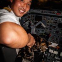 Fue invitada a hacer volar un avión en julio de 2014 Foto:Instagram.com/TaraTheHeroCat
