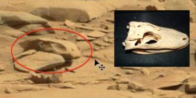 7. Un cráneo Foto:ufosightingsdaily.com