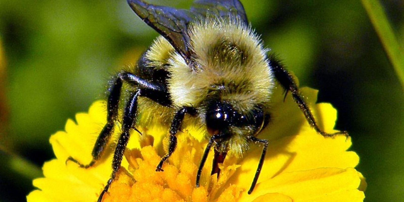 – Me gustaría saber por qué algunas especies son tan dominantes; las que, por ejemplo, se pueden encontrar en todas partes y en grandes cantidades. Básicamente es realmente extraño que un pequeño número de especies se produzcan en todas partes y se puedan encontrar en todos nuestros cultivos. Foto:Wikimedia