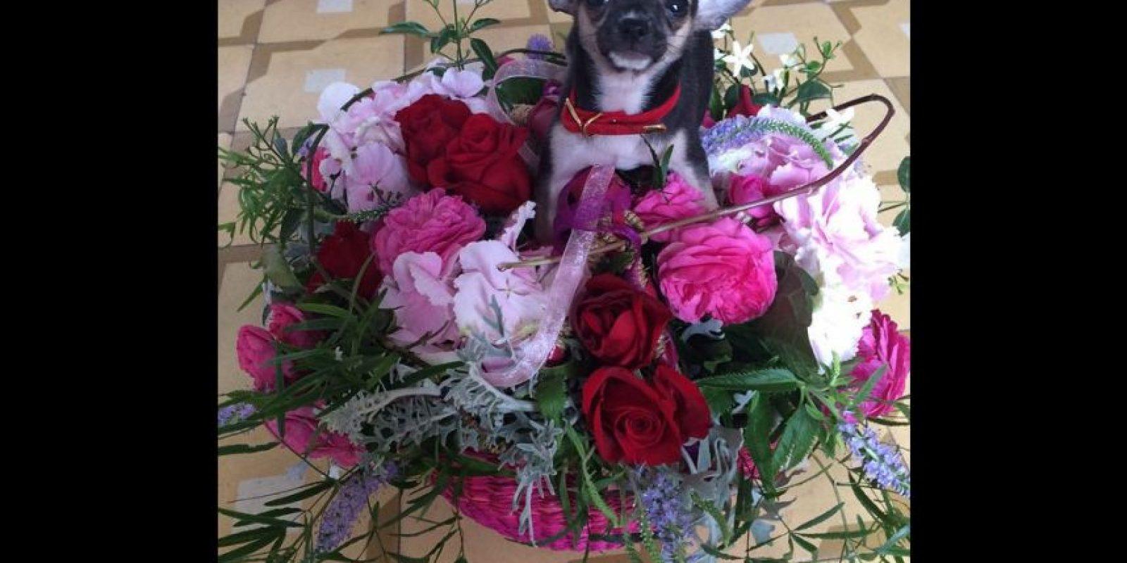Y también compartió esta foto donde aparecen un ramo de flores y un perrito dándole gracias a Dani Alves por la sorpresa. Foto:Vía instagram.com/joanasanz