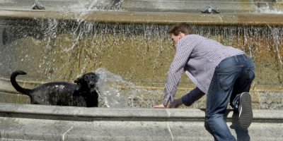 No solo las personas sufren con esta ola de calor. Foto:Getty Images
