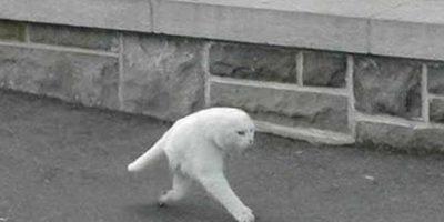 Un gato haciendo ejercicio. Foto:Google