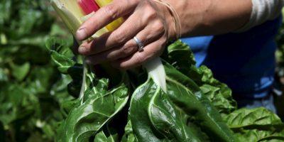 Además, en su opinión, el aceite de oliva virgen extra mejora el perfil fenólico y compensaría las deficiencias de los alimetnos crudos. Foto:Getty Images