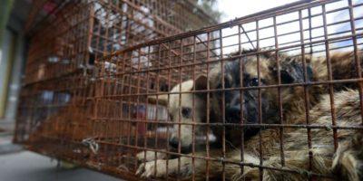 Los acusan de torturar a los animales. Foto:AP