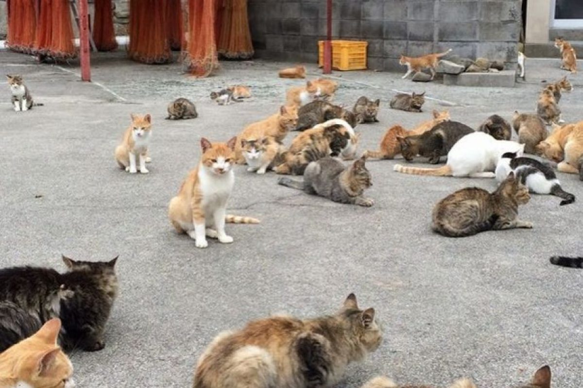 En ella los gatos son vistos como deidades. Alimentarlos parece para los habitantes de buena suerte. Foto:Whenoneearth