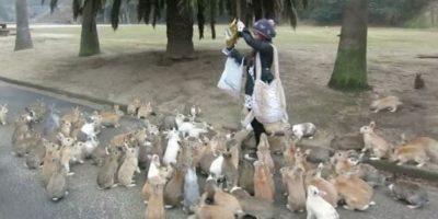 6. Ōkunoshima –Isla de conejos–. Se encuentra en Japón. Foto:Youtube