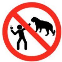No tomarse selfies con animales. Foto:vía mvd.ru