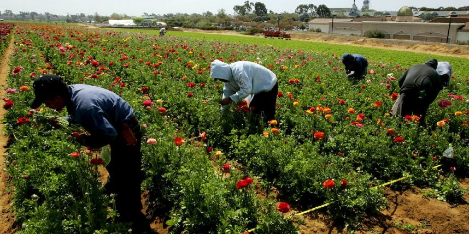 12. Agricultura y pesca- 2.5% Foto:Getty Images