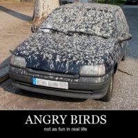 Las aves odian este auto Foto:Tumblr