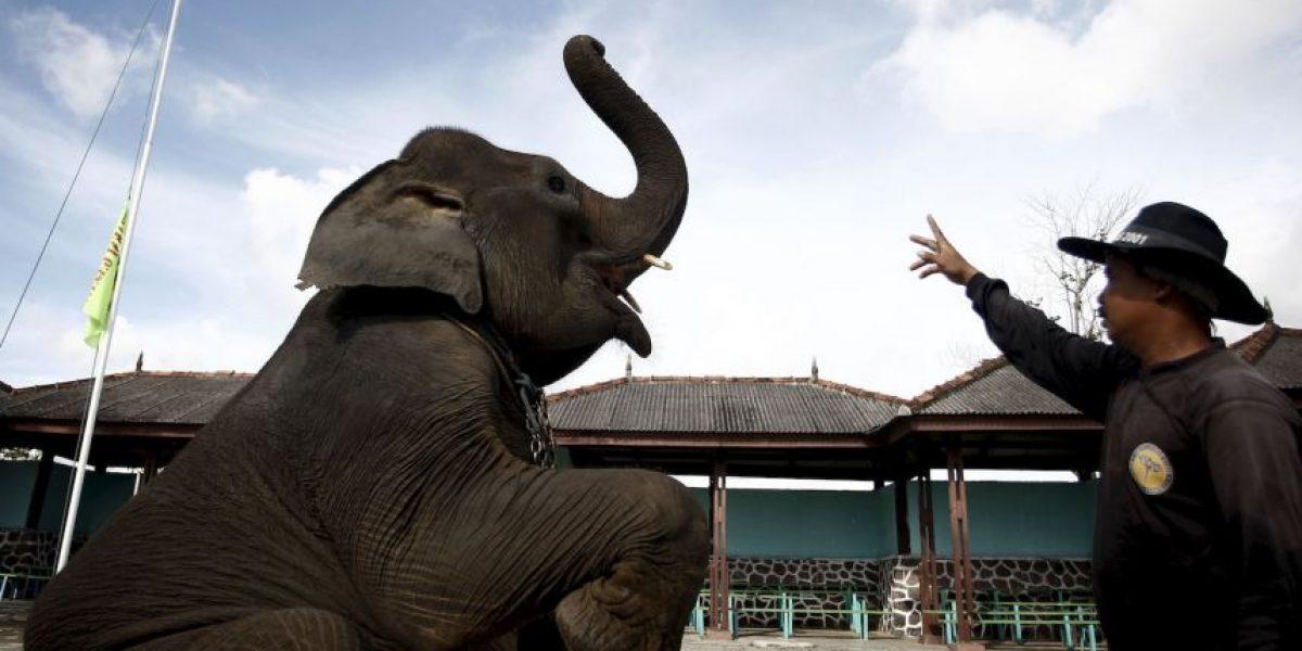 Elefantes de circo ayudan a otro que cae durante función