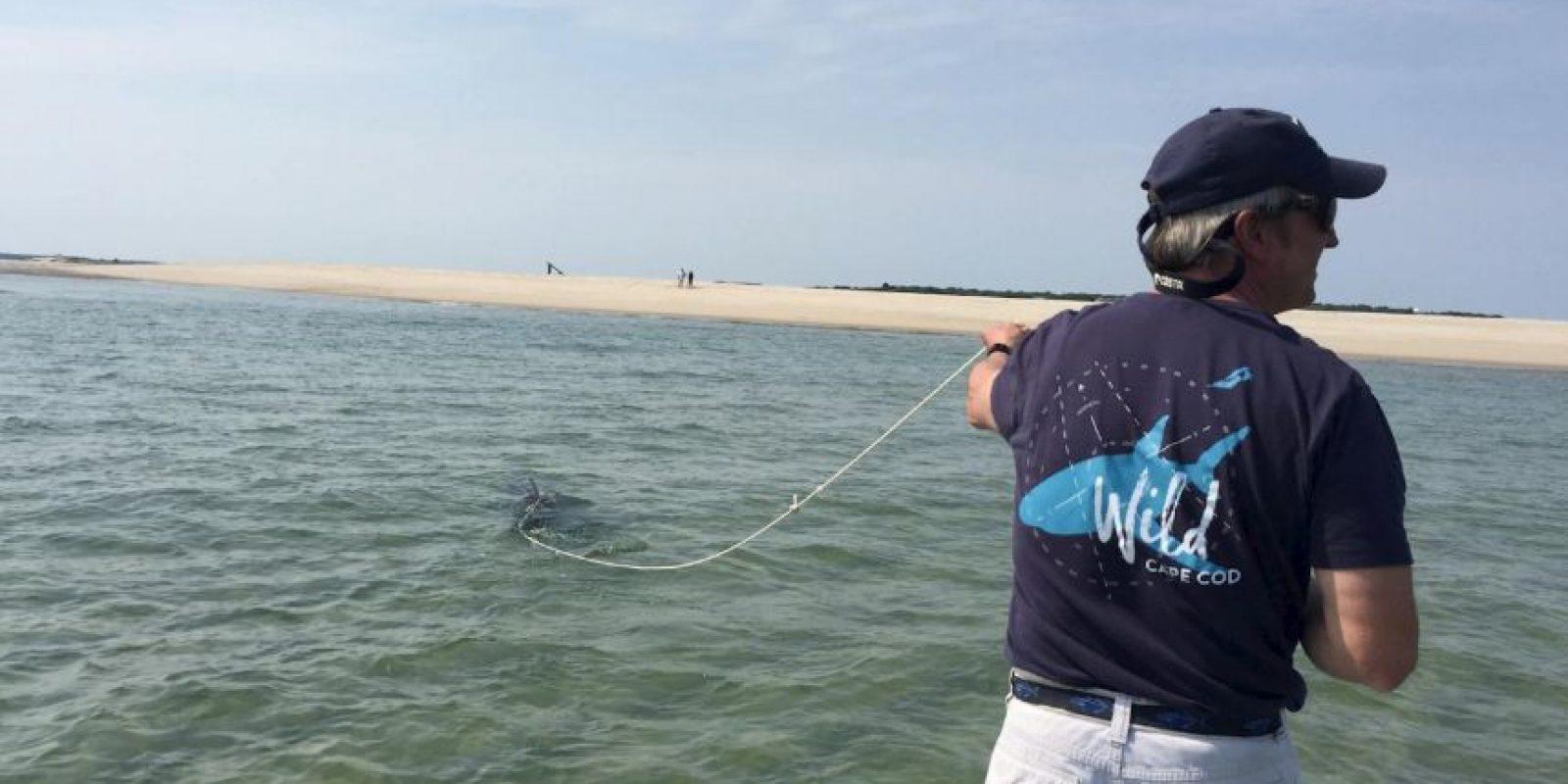 Para luego encargarse de que el animal fuera liberado lejos de la costa. Foto:Vía facebook.com/atlanticwhiteshark