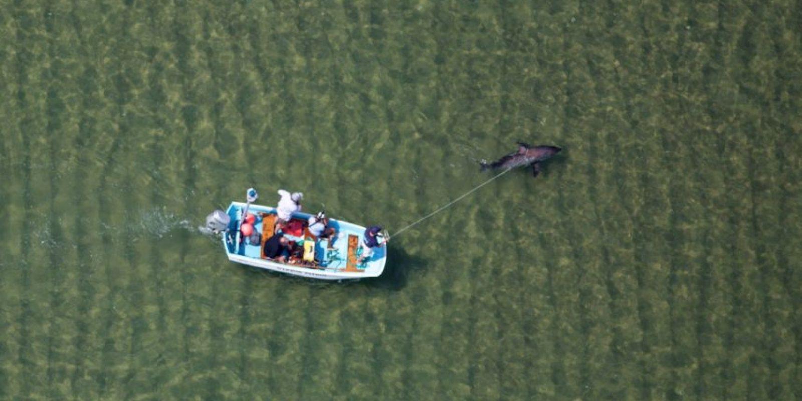 La gente llamó al equipo de rescate de la organización Atlantic White Shark Conservancy. Foto:Vía facebook.com/atlanticwhiteshark