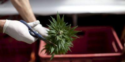 Puede llevar a la adicción Foto:Getty Images
