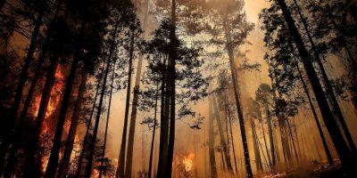 Incendio en carretera de California dejó cientos de evacuados
