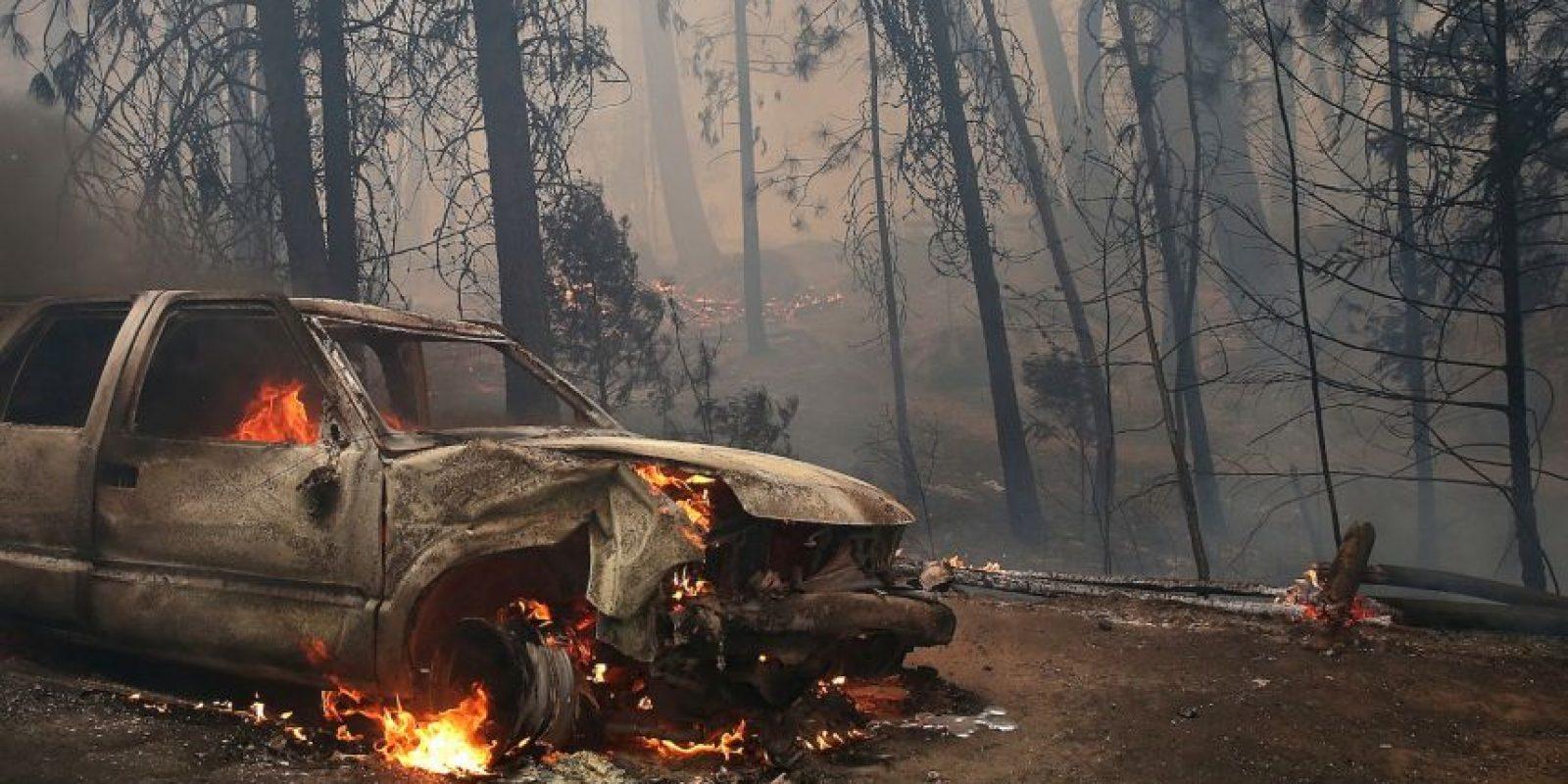 Además, tienen capacidad para superar obstáculos como carreteras, ríos y cortafuegos Foto:Getty Images