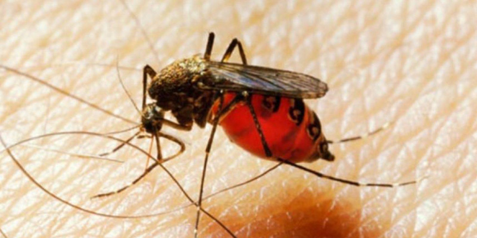 Ya que la sudoración y los olores fuertes invitan a estos insectos a picarnos. Foto:Pixabay