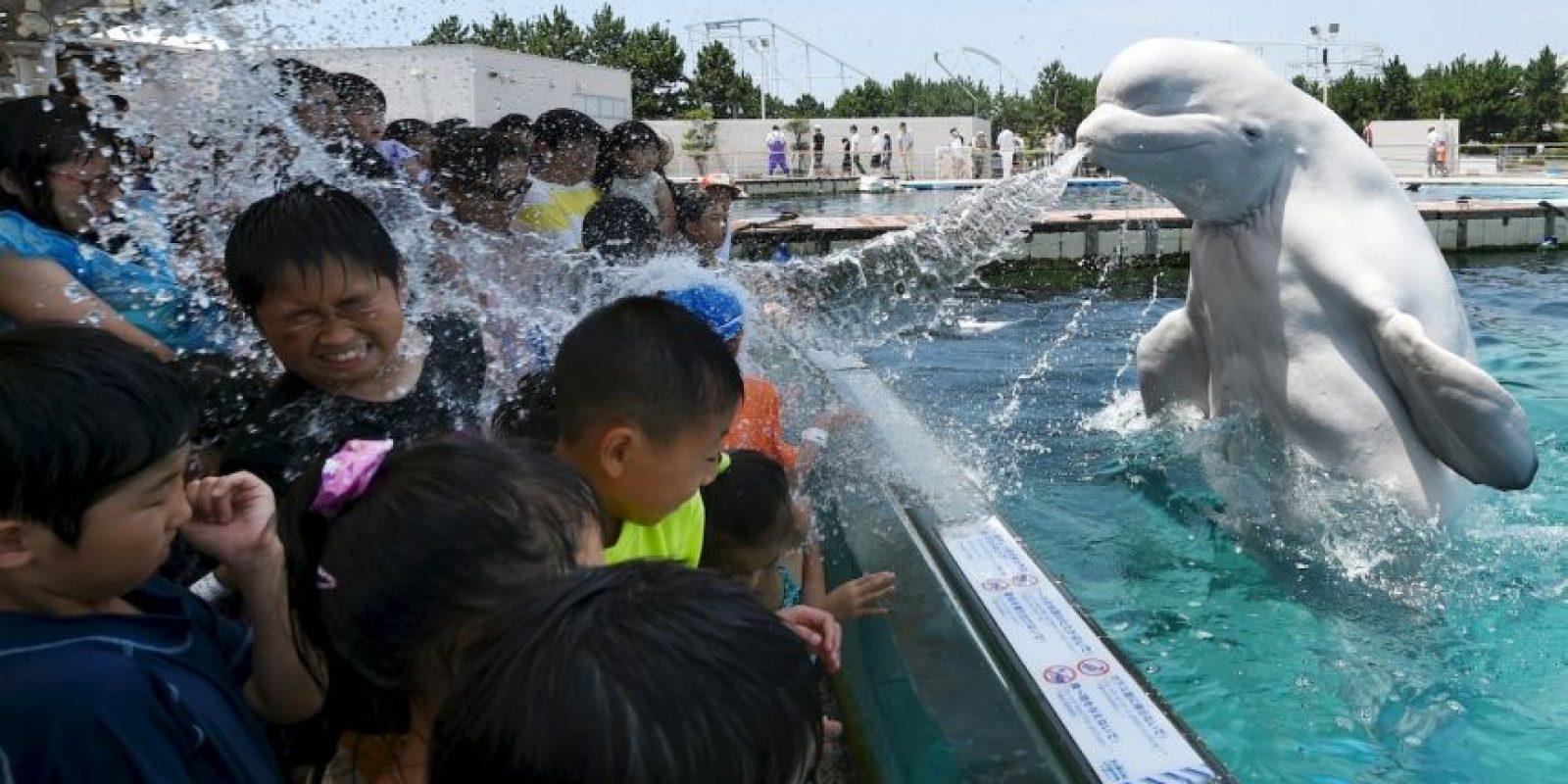 Una ballena rocía a los visitantes de un parque en Tokio. Foto:AFP