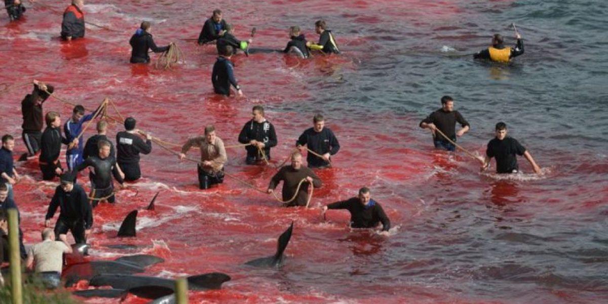 VIDEO: Así masacraron a cientos de ballenas en cruel ritual