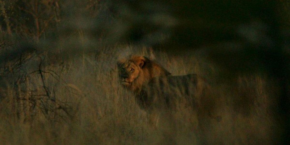 La foto que demuestra que Jericho, el compañero de Cecil está vivo