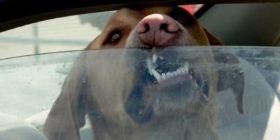 3. Con el objetivo de informar e ilustrar la situación, el veterinario estadounidense Ernie Ward se encerró en una camioneta durante 30 minutos. Foto:Tumblr
