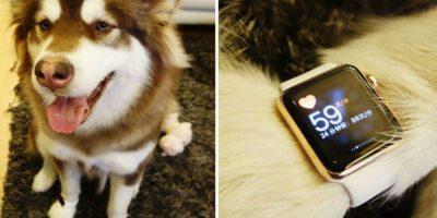 Un joven, hijo de multimillonario chino, le compró dos relojes de Apple a su perro Foto:Twitter