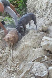 Foto:Vía Facebook.com/pedro.dinis.3994