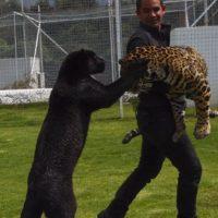 Eduardo decidió adoptarlo y protegerlo. Foto:vía instagram.com/blackjaguarwhitetiger