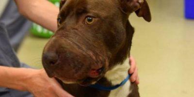 A esta pobre perra le amarraron el hocico. Foto:vía Asociación de Animales de Charleston